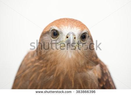 Eagle Banco de imágenes. Fotos y vectores libres de derechos.