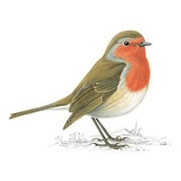 Top 395 ideas about Robin Redbreast on Pinterest.
