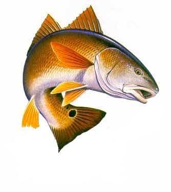 Man Fishing With Pole Redfish Clipart.
