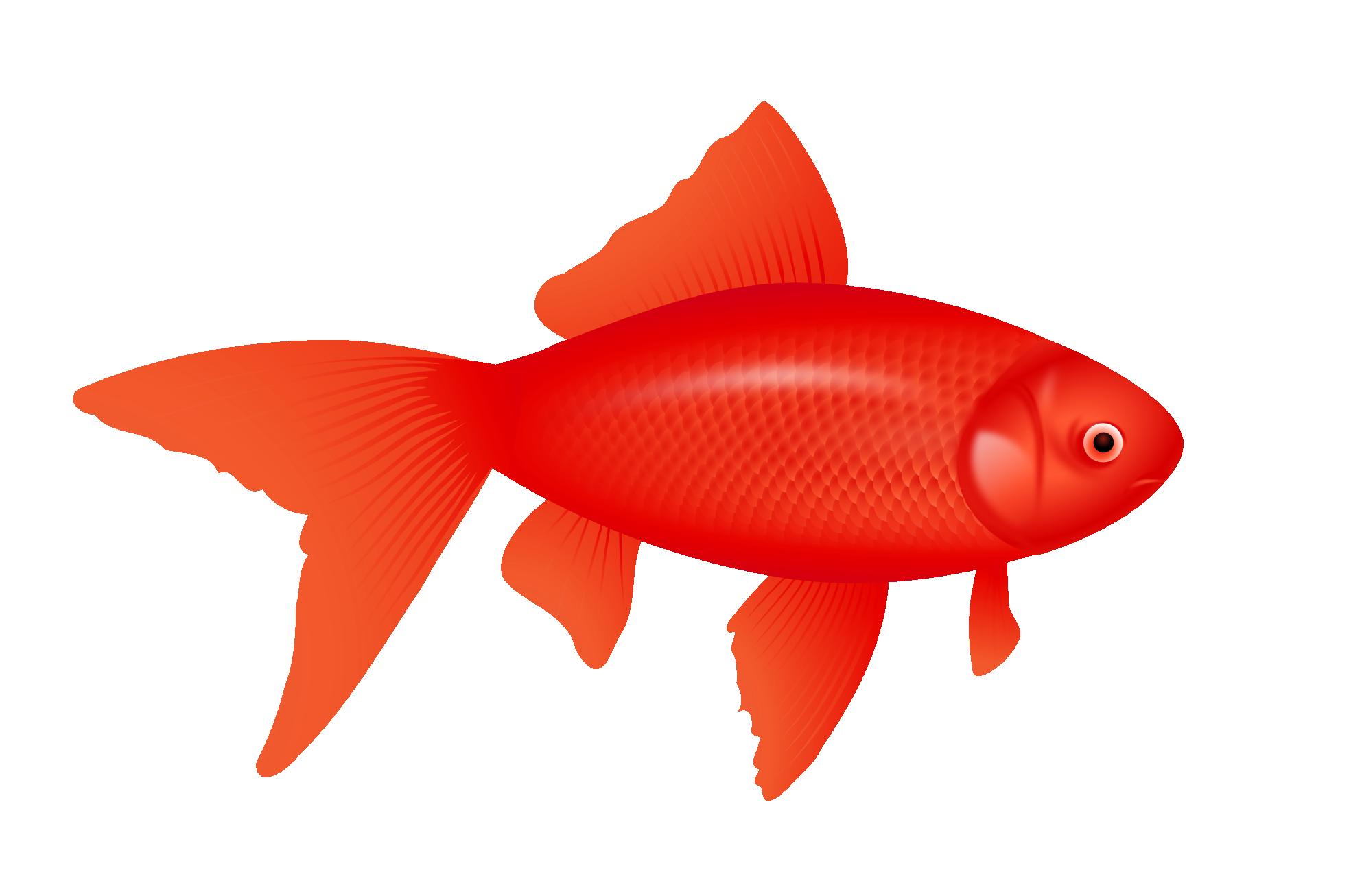 Redfish Clip Art.