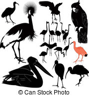 Red tailed black cockatoo Clip Art and Stock Illustrations. 6 Red.