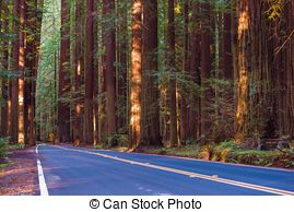 Stock Image of Redwood Avenue.