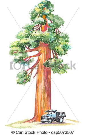 Sequoia Illustrations and Clip Art. 50 Sequoia royalty free.