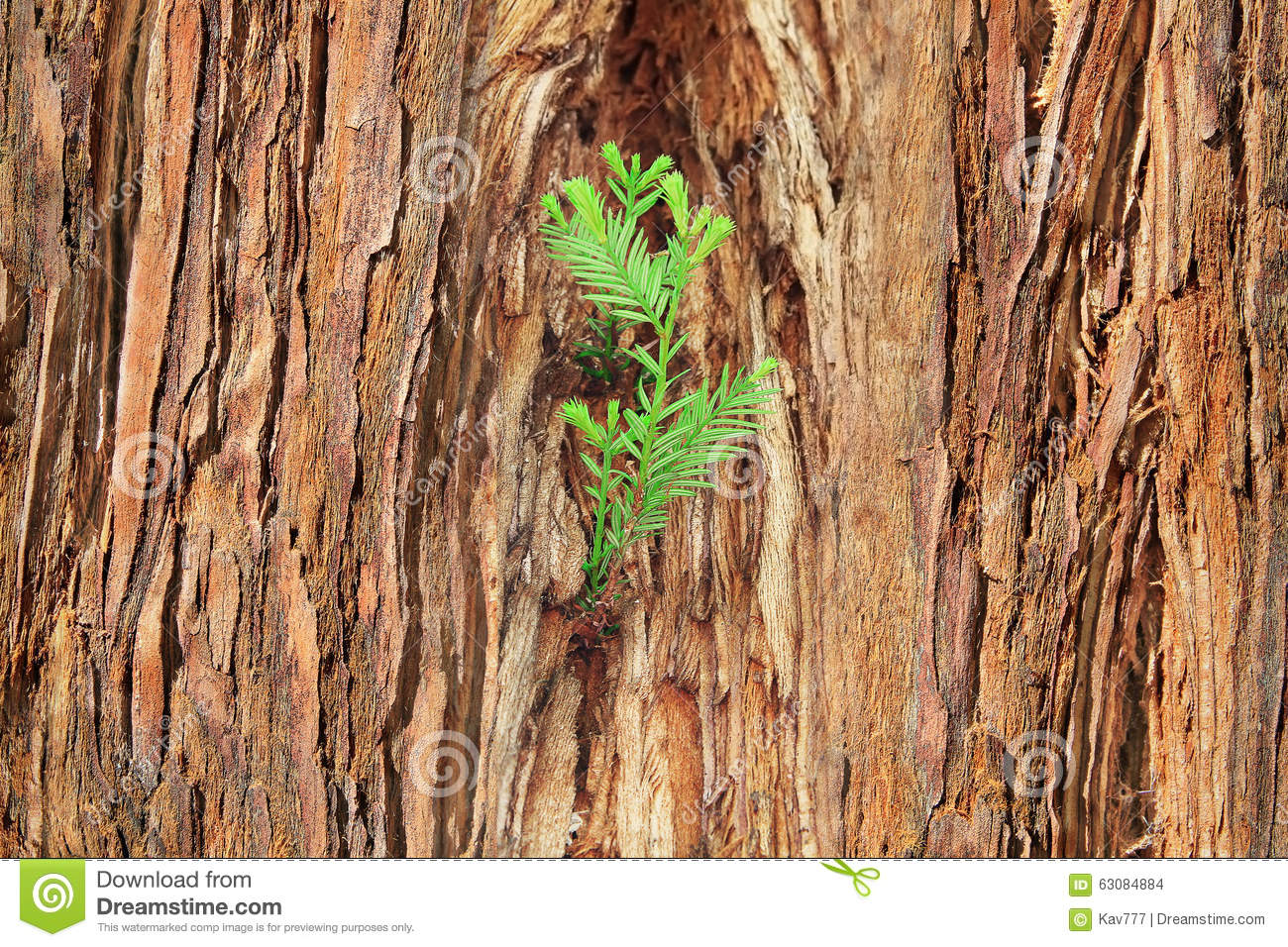 Small Sprout On Old Tree, Symbolizing New Life, New Project Or N.