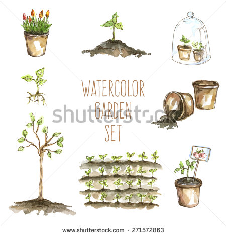 Tree Sapling Stock Images, Royalty.