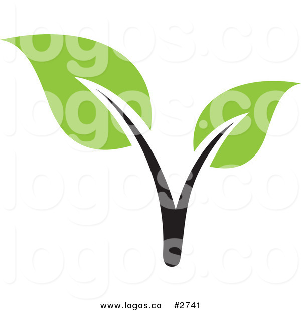 Mustard Seed Tree Leaf Clipart.