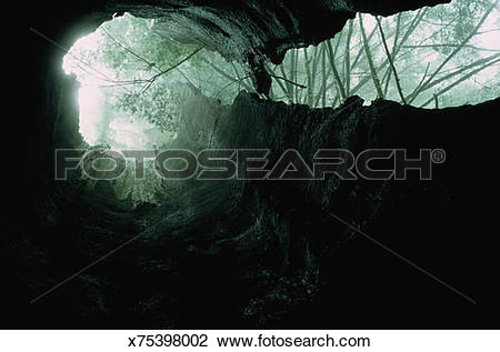 Stock Photo of Through Trunk of Burned Out Redwood Tree x75398002.