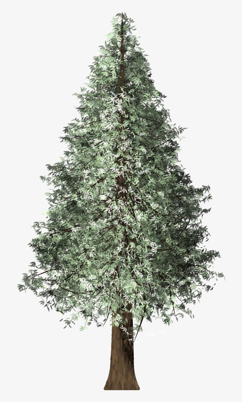 Redwood Tree,redwood,christmas.