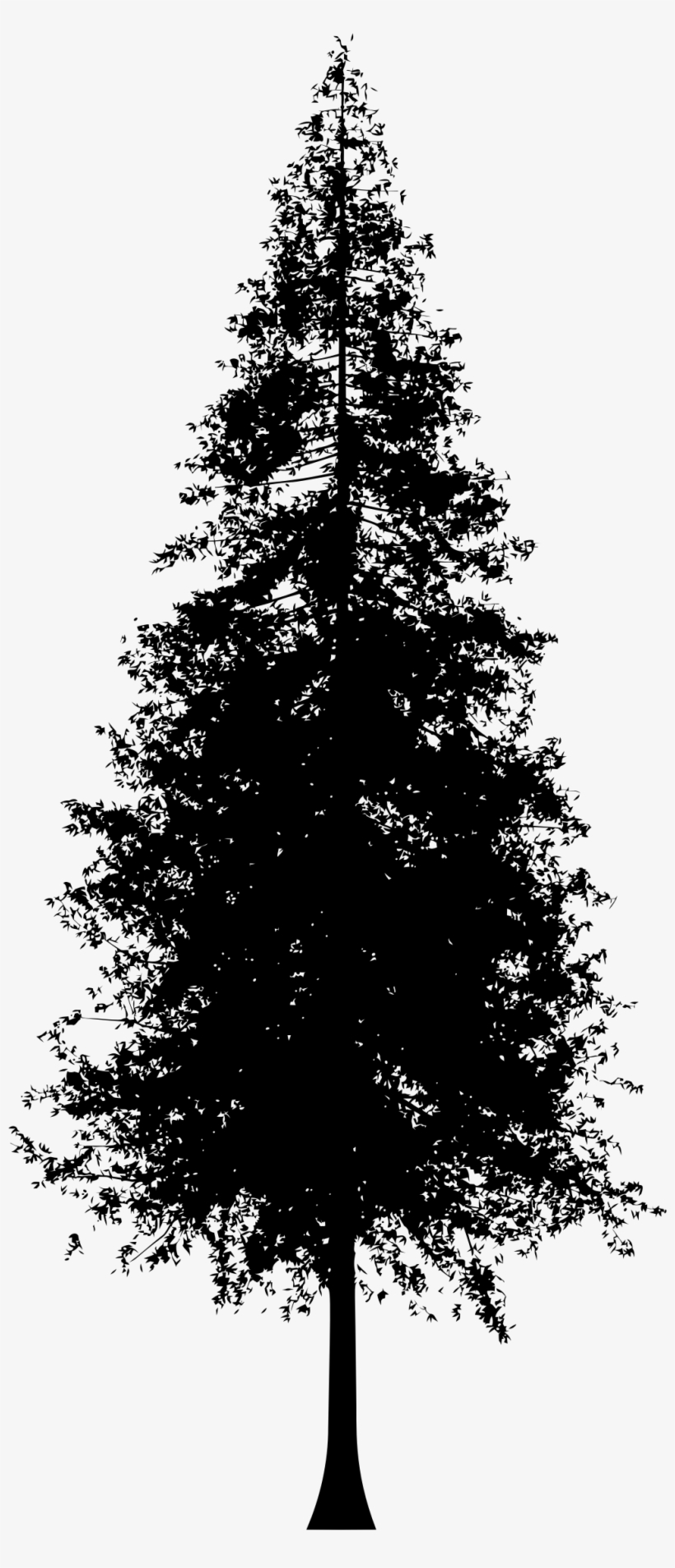 Redwood Tree Png, png collections at sccpre.cat.