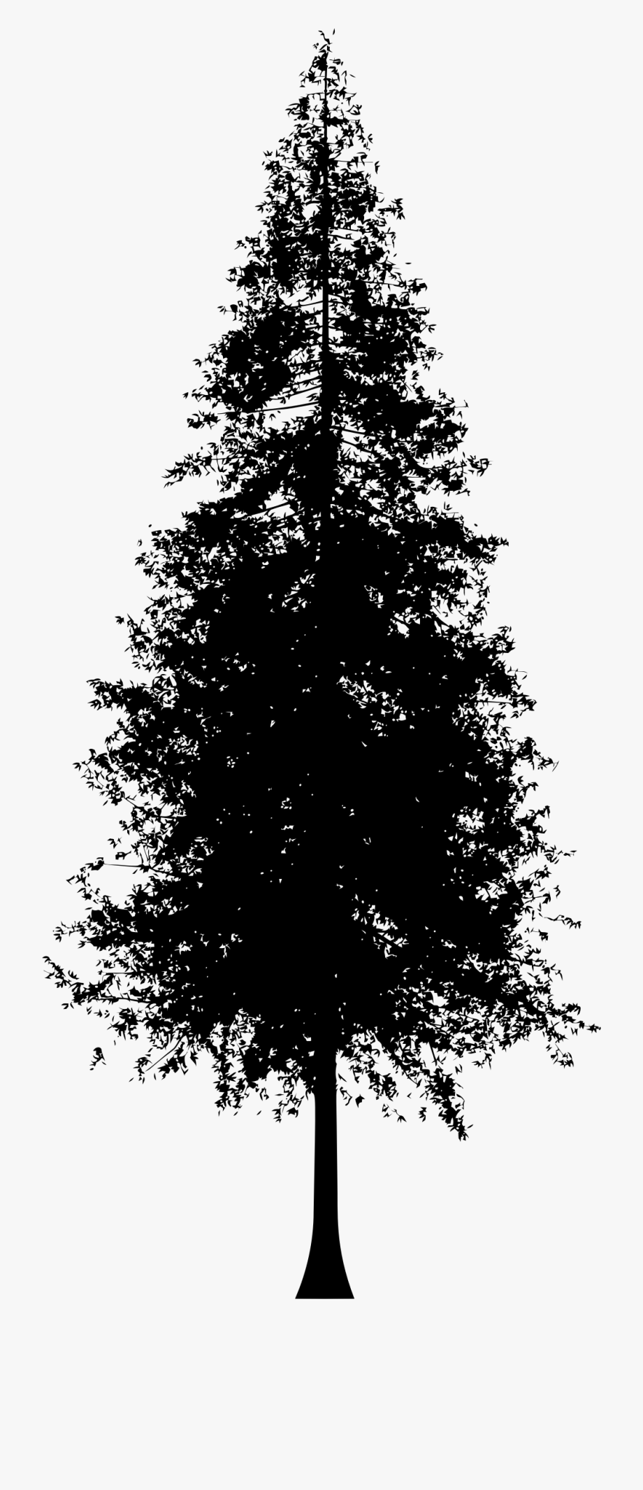 Picture Transparent Stock Redwood Tree Clipart.