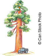 Redwood Clip Art and Stock Illustrations. 146 Redwood EPS.