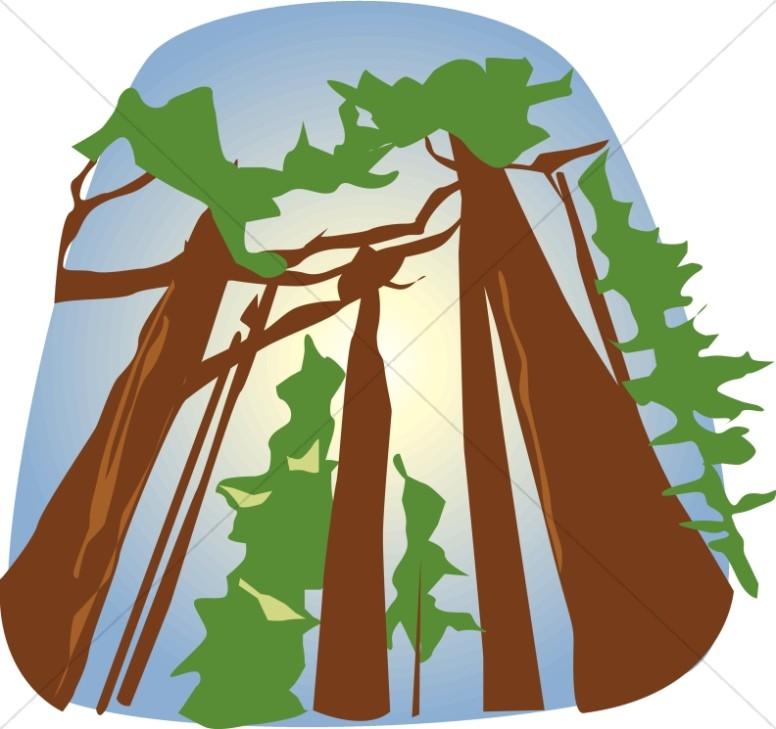 Towering Redwoods.
