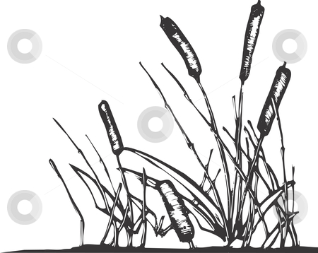 Reed Clip Art.