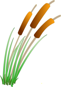 Reed Clipart.