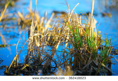 Reed islands Stock Photos, Images, & Pictures.