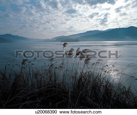 Stock Photography of plants, reed, plant, lake, cloud, grass, sky.