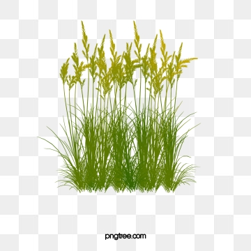 Reed Png, Vector, PSD, and Clipart With Transparent.
