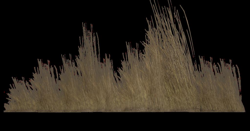 Grass,Tree,Plant,Grass family,Branch,Phragmites,Twig,Reed.