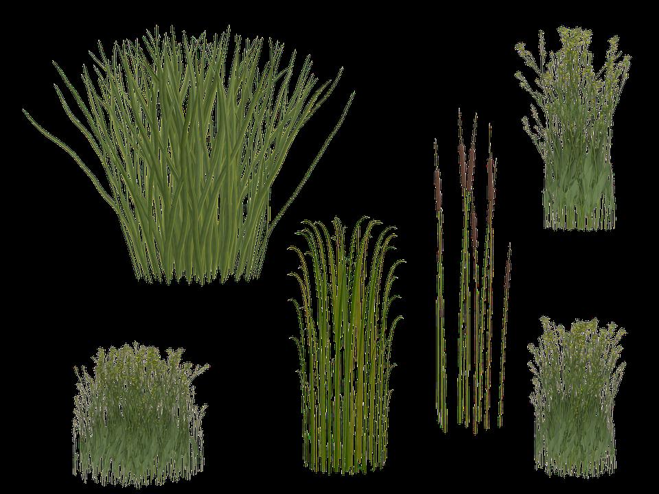 Marsh Reeds Png & Free Marsh Reeds.png Transparent Images.