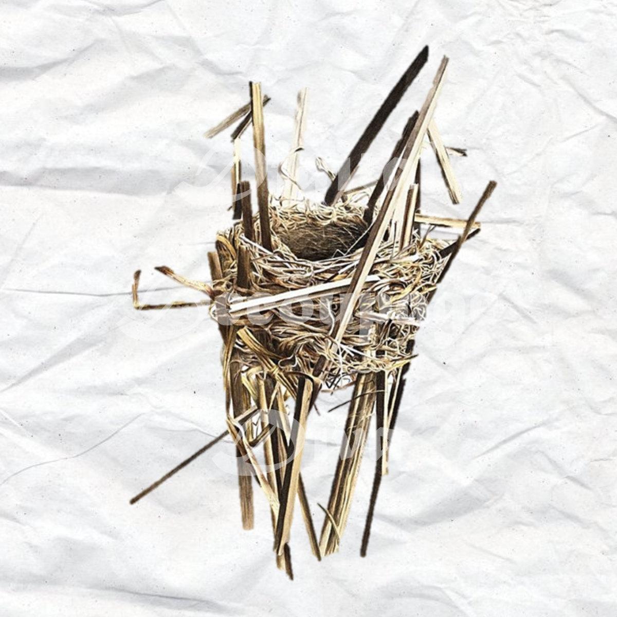 Reedy Birds Nest Clip Art * Digital File * Digital Download.