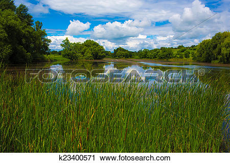 Stock Photography of reedy pond k23400571.