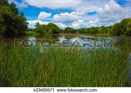 Stock Photography of reedy pond k23400571.