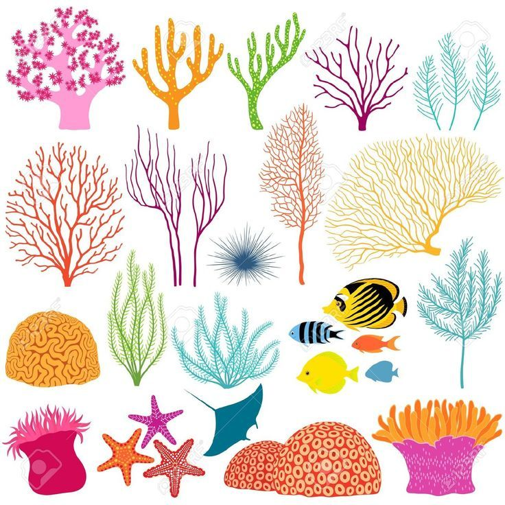 coral reef stencils.