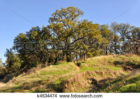 Stock Photo of Northern California Recreation and Wildlife Refuge.