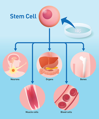 Regenerative Medicine Clip Art, Vector Images & Illustrations.