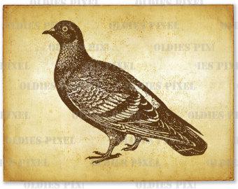 antique pigeons.