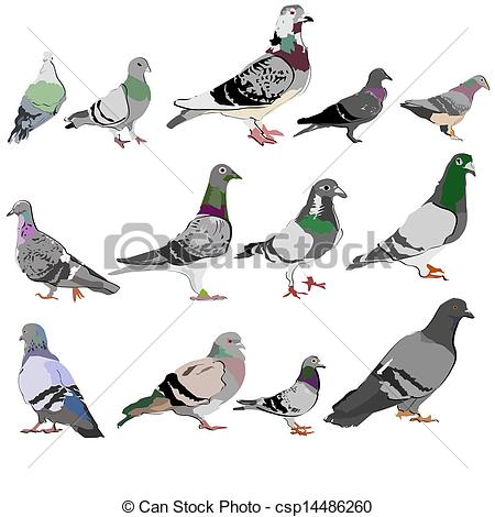 Clip Art Vector of Background with pigeons csp14486260.