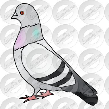 Pigeon Picture for Classroom / Therapy Use.