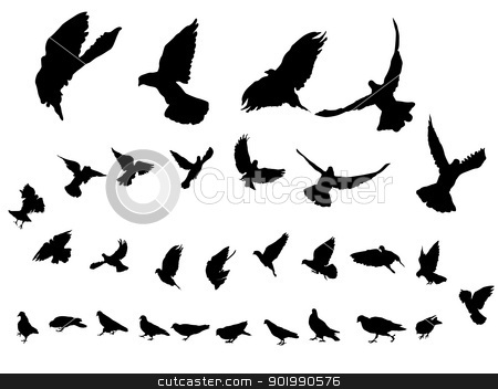Pigeons stock vector.