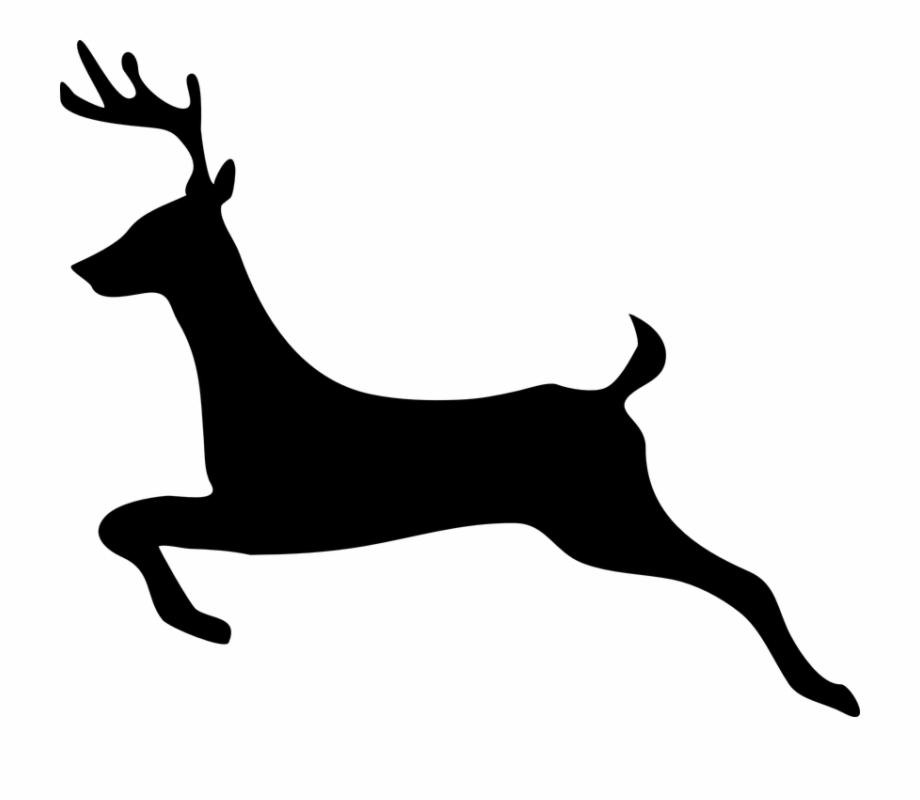 Deer Stag Animal Hoofed Cervus Jump.