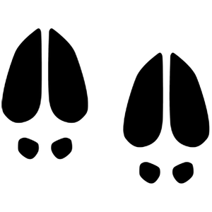 Reindeer Footprints Clipart.