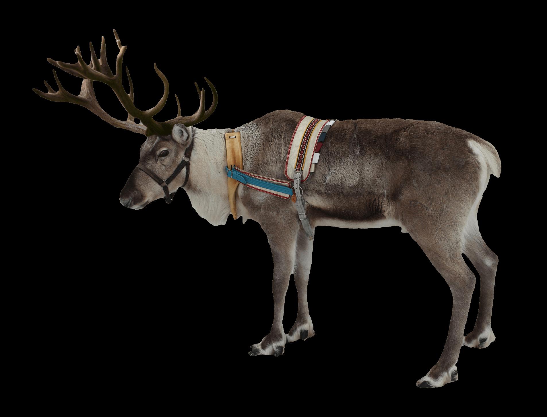 Reindeer Christmas transparent PNG.