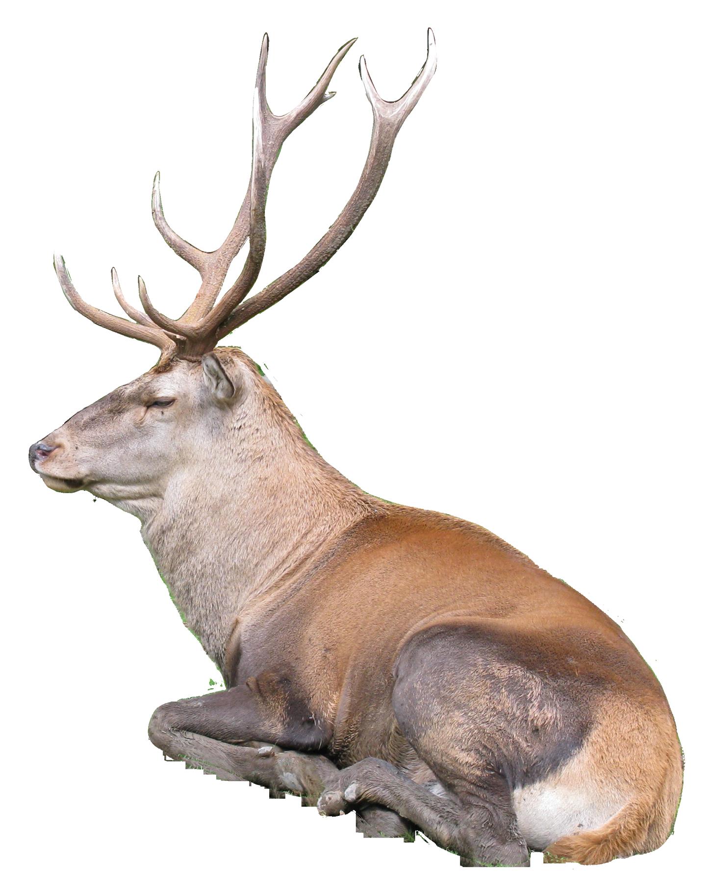 Reindeer PNG Transparent Image.