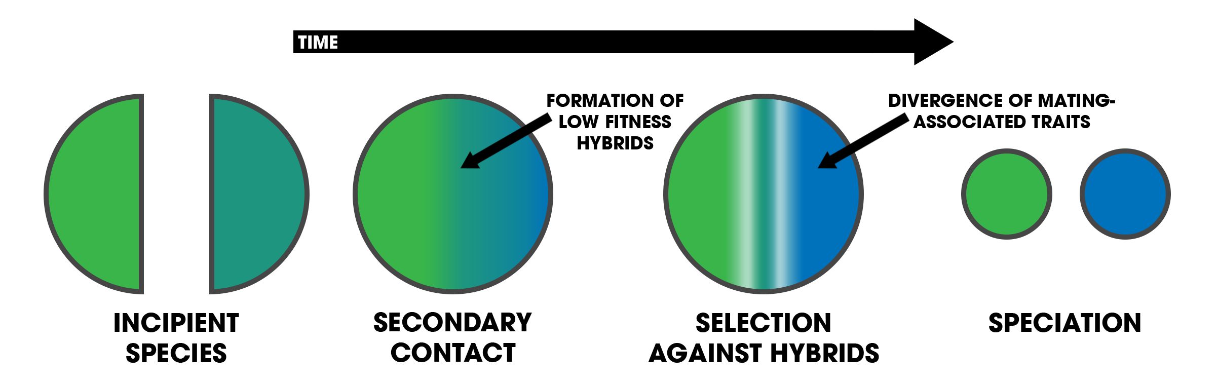 File:Reinforcement (Process diagram).png.