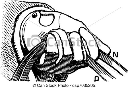 Clipart Vector of How to hold the reins of horse in simple riding.