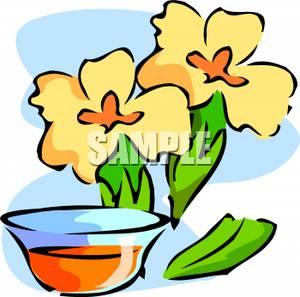 Herbal Remedies Clip Art.