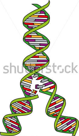 Gallery For > DNA Replication Clipart.