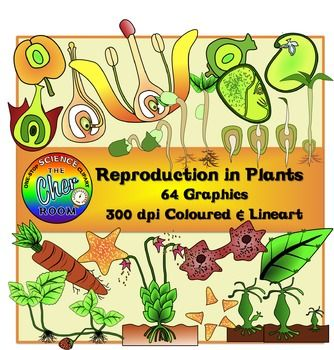 Reproduction in Plants Clipart.