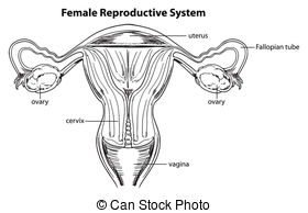 Reproductive Illustrations and Clip Art. 2,368 Reproductive.