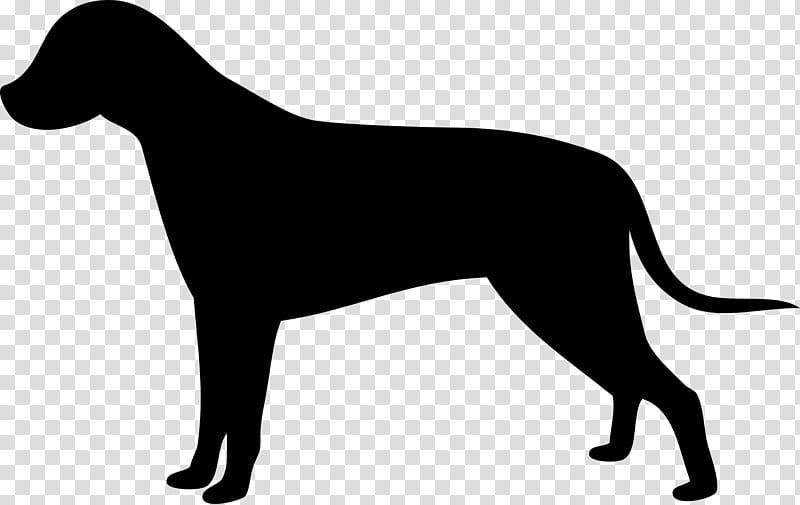 Mountain, Labrador Retriever, Puppy, Conformation Show, Show.