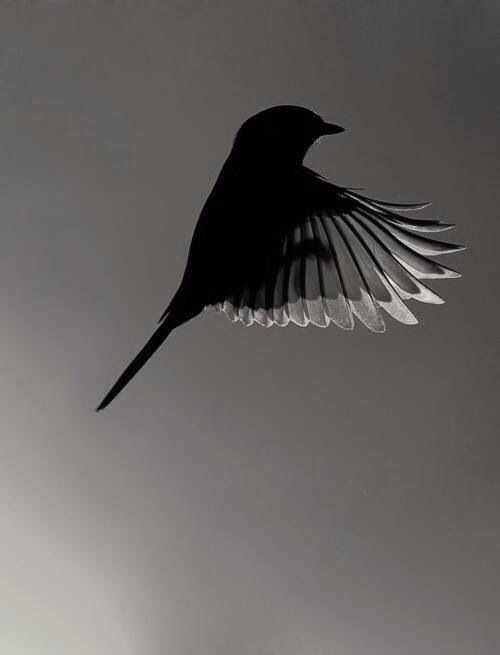 1000+ images about Silhouettes/shadows on Pinterest.