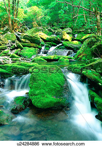 Stock Images of moss, scenery, valley, stone, water, tree, nature.