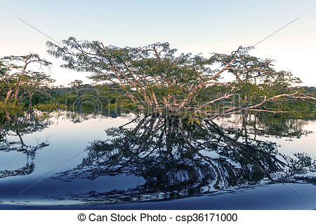 Stock Photography of Water Trees, Cuyabeno Wildlife Reserve.
