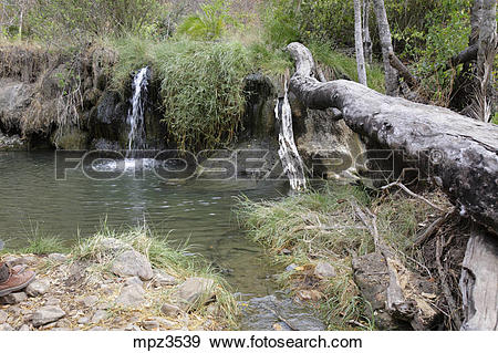 Stock Photograph of Natural warm water pool in Selous Game Reserve.
