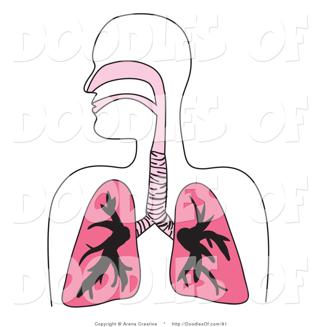 Free clipart respiratory system.