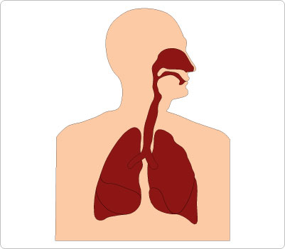 103+ Respiratory System Clipart.